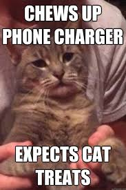 Sassy Cat Meme - chews up phone charger expects cat treats sassy kitty quickmeme