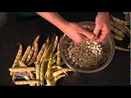 comment cuisiner les haricots coco coco de paimpol le préparer le cuire