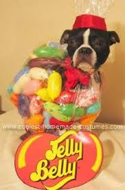 Small Puppy Halloween Costumes 37 Creative Diy Halloween Costumes Images