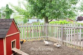 chickens in the backyard home design