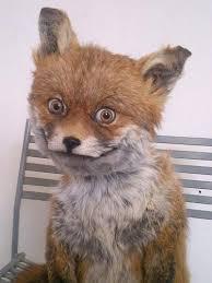 Fox Meme - scary fox blank template imgflip