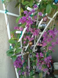 trellis u2013 tjs garden