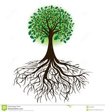 oak tree with roots and dense foliage vector royalty free stock