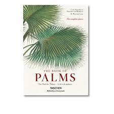 palmier du chili le livre des palmiers taschen