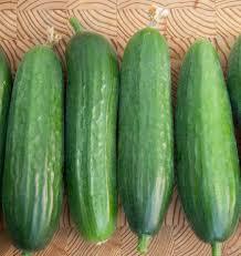 picolino organic cucumber seeds