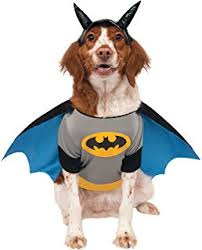 amazon com dc comics teen titans pet costume small robin pet