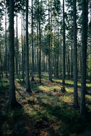wallpaper tumblr forest forest stock 42 by sed rah stock on deviantart