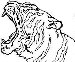 19 dessins de coloriage tigre en ligne à imprimer