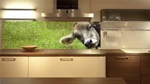 spritzschutz küche wandpaneele küche neues design für die küchenrückwand