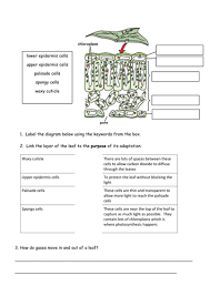 leaf structure worksheet by andrewj123 teaching resources tes