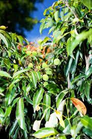 don u0027s tips tropical plants burke u0027s backyard