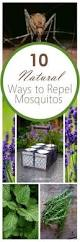 Gardening Pest Control - 14 home remedies for any kind of garden pest gardens yards and