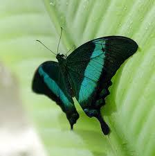 butterfly house la casa delle farfalle chelsea fringe