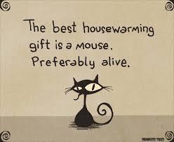 housewarming gift brainless tales