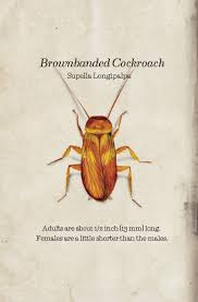 Tiny Brown Bug In Bathroom Bug Book Western Exterminator