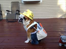 Bob Builder Halloween Costume Diy Dog Halloween Costumes Diy Halloween Dog Costume Dogs