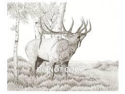 western wildlife art print drawing of a bull elk bugling to
