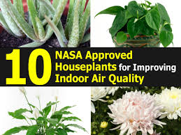 best plants for air quality 10 nasa approved houseplants for improving indoor air quality
