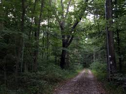 Indiana forest images Indiana woodland steward bats in your woods jpg