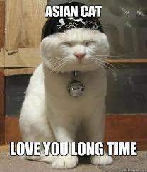 Me Love You Long Time Meme - cat memes love google search you are so beautiful to me