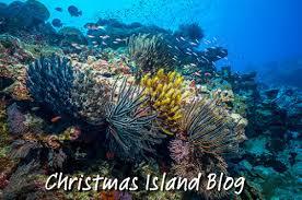 christmas island tourism association recent blog posts