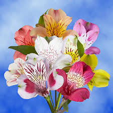 flowers delivered tomorrow alstroemeria flowers delivered tomorrow global