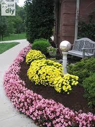 25 best annual flowers ideas on pinterest perennial flowering