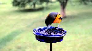 wild bird house bluebirds u0026 orioles eating mealworms u0026 grape