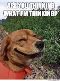 Stoned Dog Meme - stoned dog weknowmemes