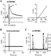 the transduction channel trpm5 is gated by intracellular calcium