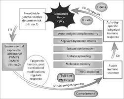 pathogenesis and treatment of glomerulonephritis an update