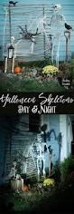 halloween skeleton display for day u0026 night chicken scratch ny