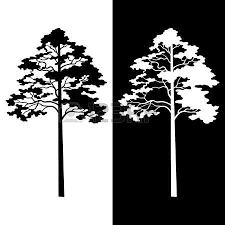 fir trees symbolical pictogram black contours isolated