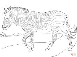 mountain zebra coloring page free printable coloring pages