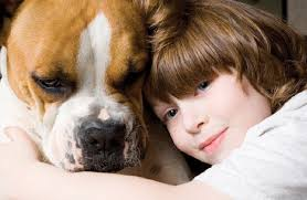 boxer dog gum problems learn about the boxer dog breed from a trusted veterinarian