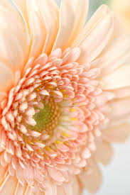 peach color 302 best color peach images on pinterest peach blush coral and