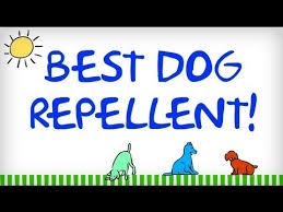 How To Keep Cats Off Outdoor Furniture by Best Dog Repellent Tips For Repelling Dogs Natural Animal