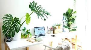 best plant for desk best desk plants best indoor desk plants desk plants tmrw me