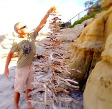 how to make a driftwood christmas tree youtube