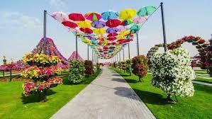 dubai miracle garden u2013 world u0027s largest natural flower garden