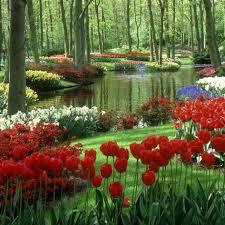 bedroom tulip flower bed designs exterior beautiful red tulip