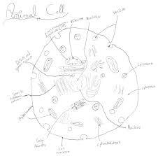animal cell diagram worksheet schematics wiring diagram