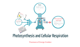 photosynthesis and cellular respiration by teika clavell on prezi