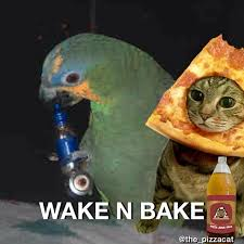 Wake N Bake Meme - pizzacat party monday wake n bake there is only one original