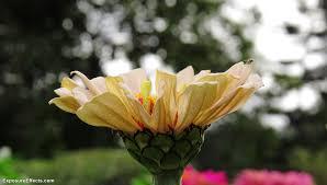 lalbagh botanical garden in bangalore u2014 india ghoomo