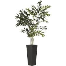 Pier One Planters by Indoor Trees U0026 Plants 2 Polyvore