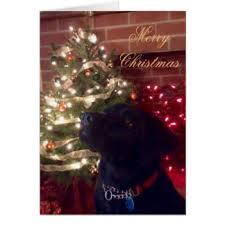 black labrador christmas greeting cards zazzle