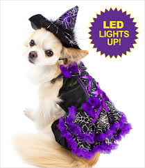 Dog Halloween Costumes Led Purple Witch Costume Dogs Witch Costumes Costumes Dog