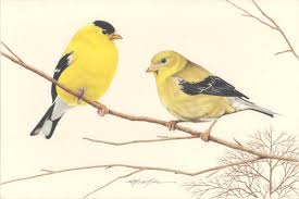 george glazer gallery antique bird prints goldfinches