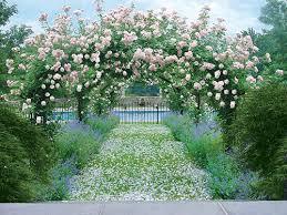 the tea room pink spring u0027s garden beauties